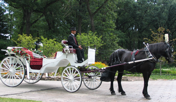 Man Riding a Horse Carriage on a Park
